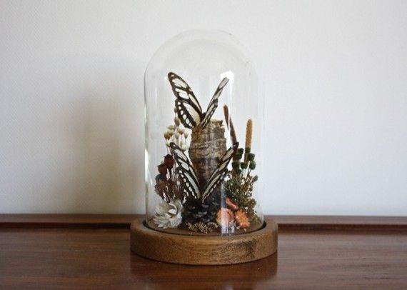 Taxidermy Genuine Butterflies in Glass Dome Bell Jar with Wood Base