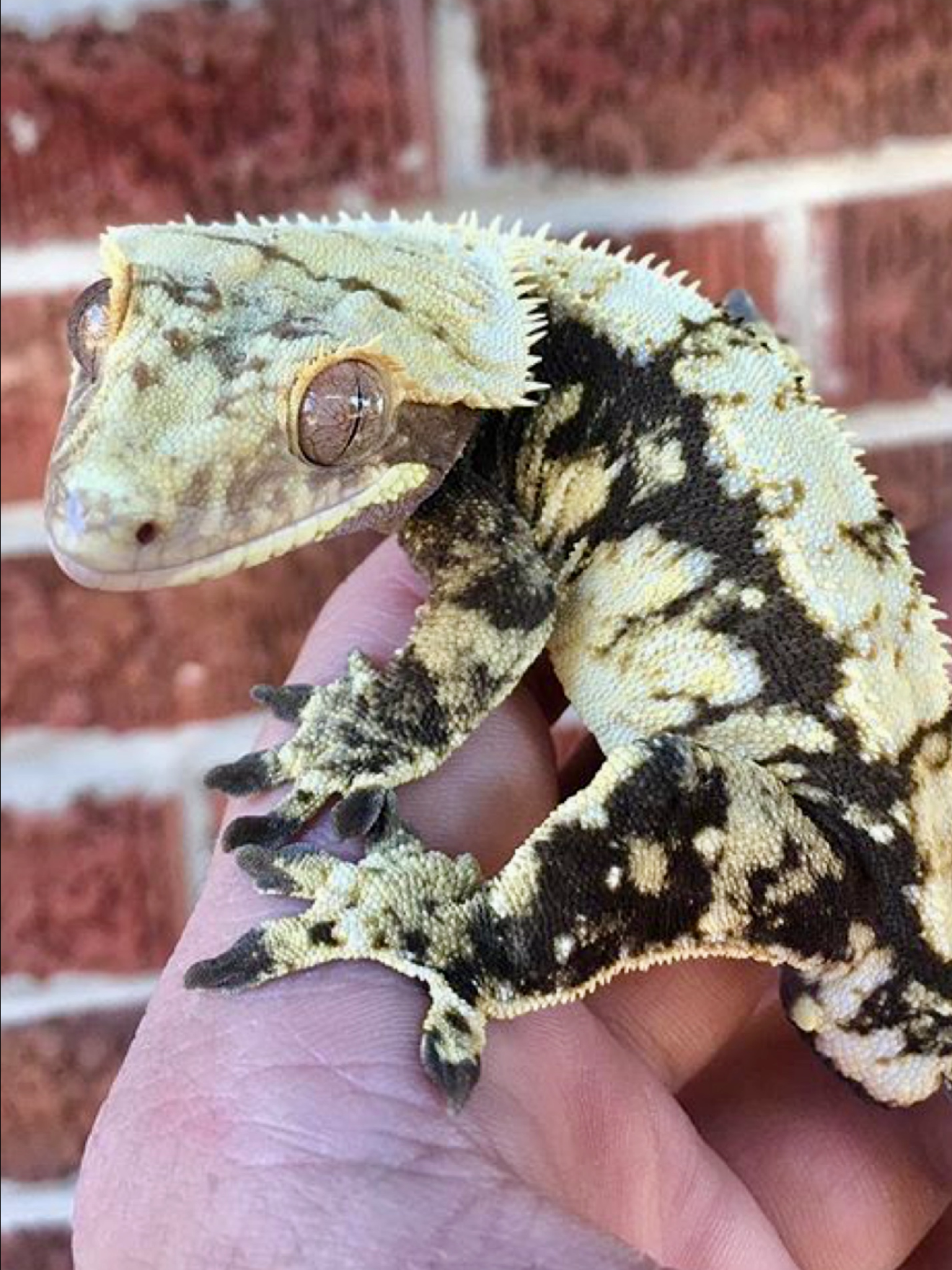 Pin by Knoxx on Scaley Mom Cute reptiles, Reptiles pet