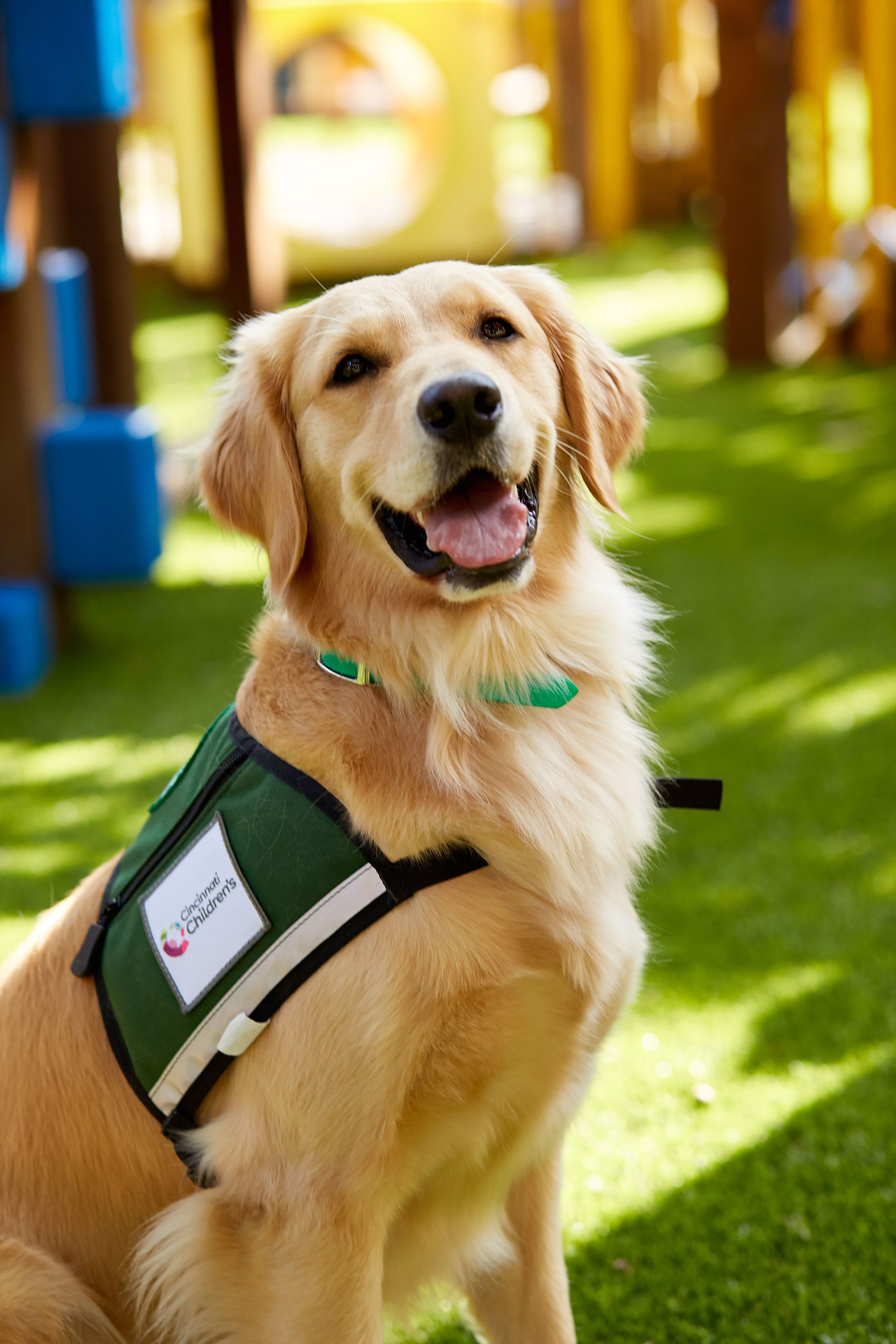 See Two Support Dogs Bring Comfort Happiness To Children In A