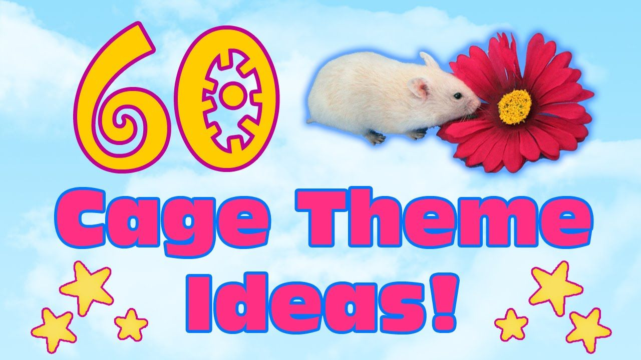 60 Creative Cage Theme Ideas For Pets List Hamster Cages Cute Hamsters Baby Hamster