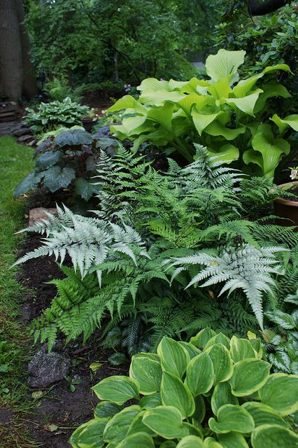 Shady border with Athyrium and hosta #shadeplantsperennial