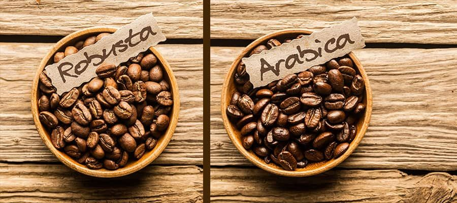 Arabica Vs Robusta Coffee What Is The Difference Craft Coffee Guru In 2020 Arabica Coffee Robusta Coffee Coffee Crafts