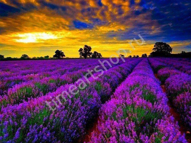 Закат над лавандовым полем, картина раскраска по номерам ...