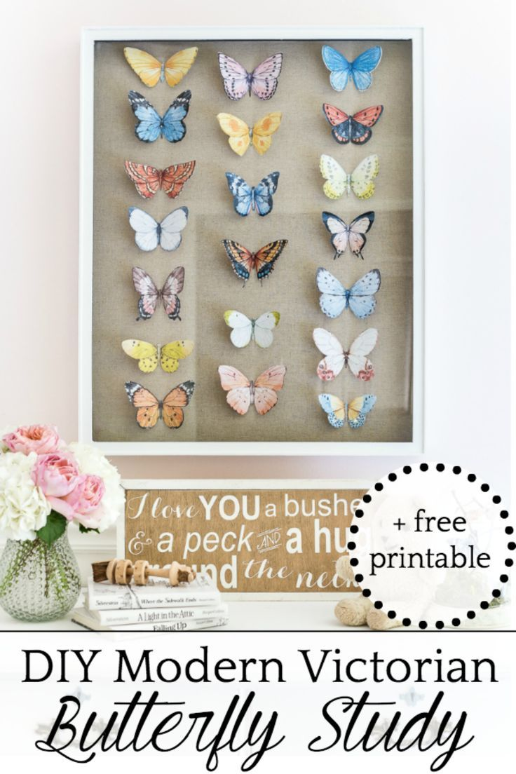 DIY Butterfly Study Shadow Box