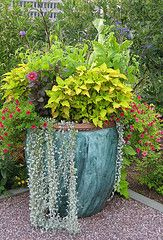 Large Container With Variety Of Plants