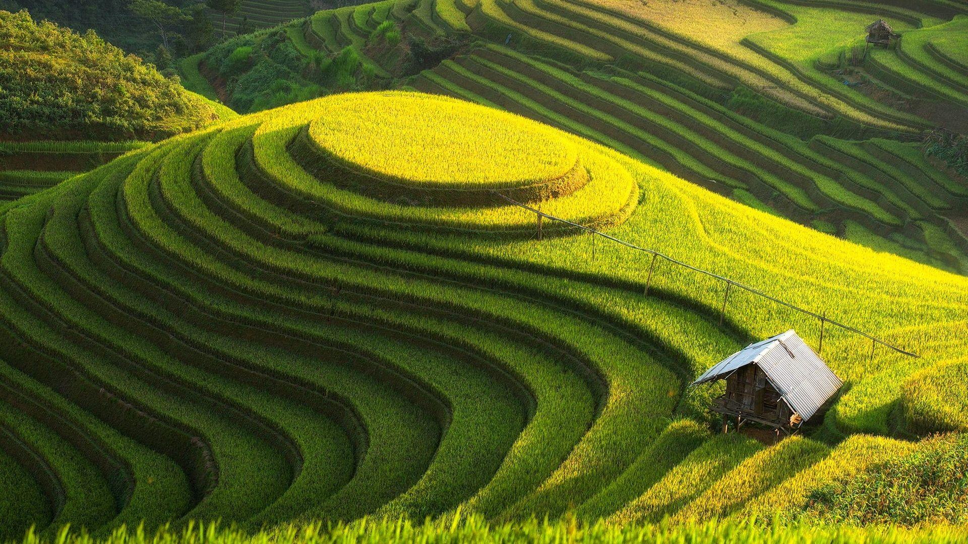 Landscape Nature Terraced Field Grass Field Hills