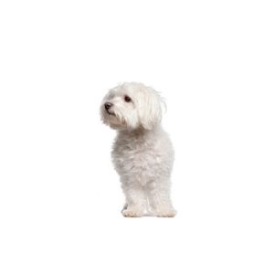 Schnoodles Dog Puppy Websites Puppies Dogs And Puppies Dogs