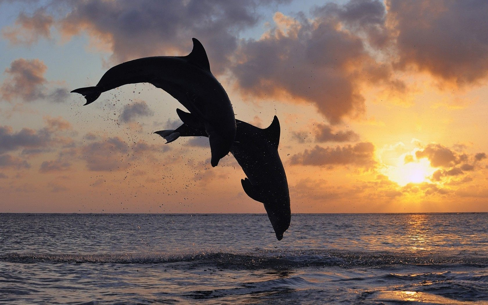 Dolphin Sunset Wallpapers Dolphins, Topsail beach