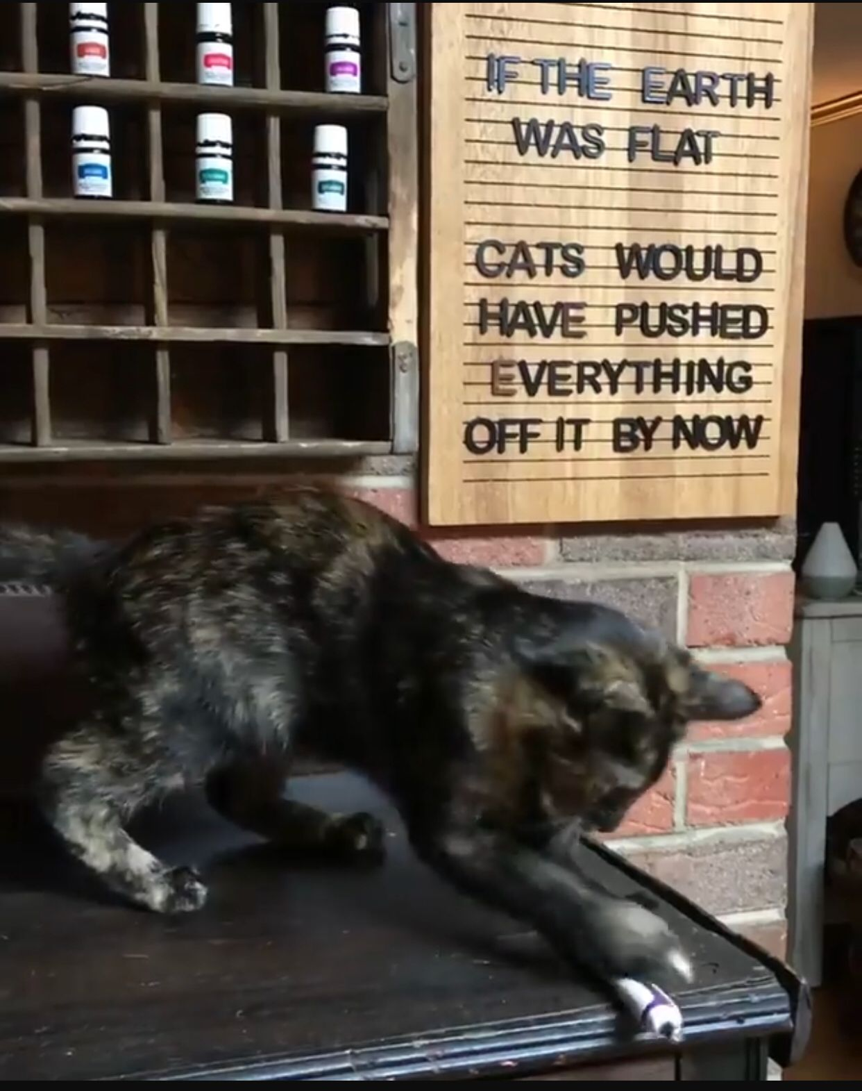 Cat, letter boards, flat earth Cats, Funny animal memes