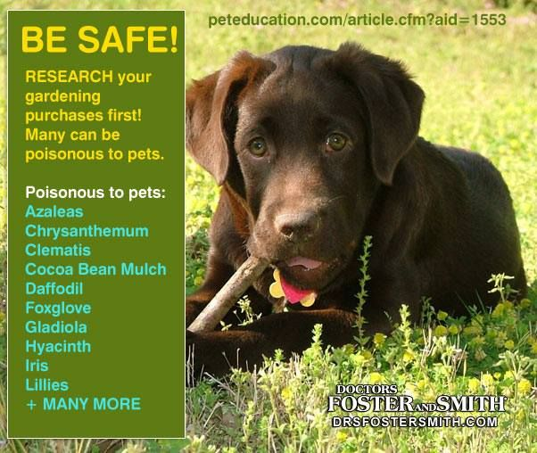 6 Common Plants That Are Poisonous To Dogs And Cats Pet Safe