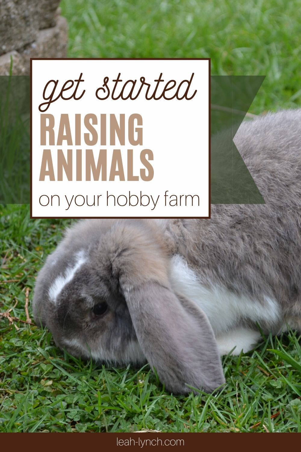 How To Get Started Raising Animals On A Hobby Farm In 2020