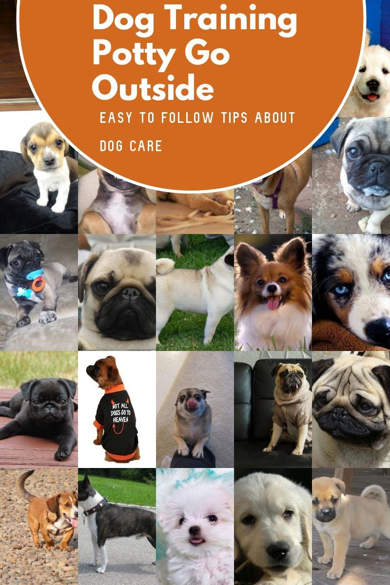 Tips For Becoming A Better Pet Owner Want To Know More Click On The Image Dogtrainingpottygooutside Dog Potty Training Dog Training Basic Dog Training