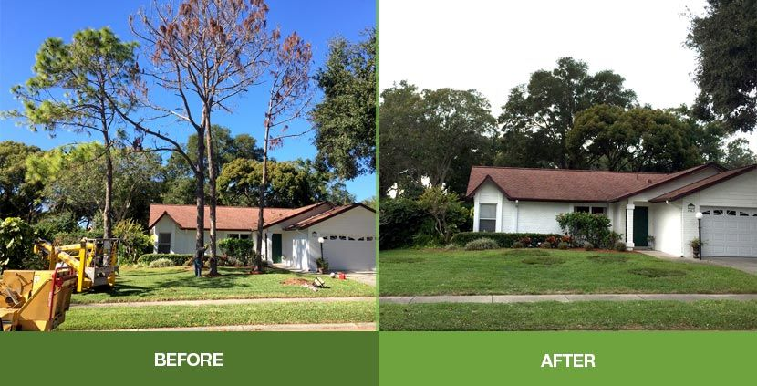 Dont let unsightly trees block your views give us a call