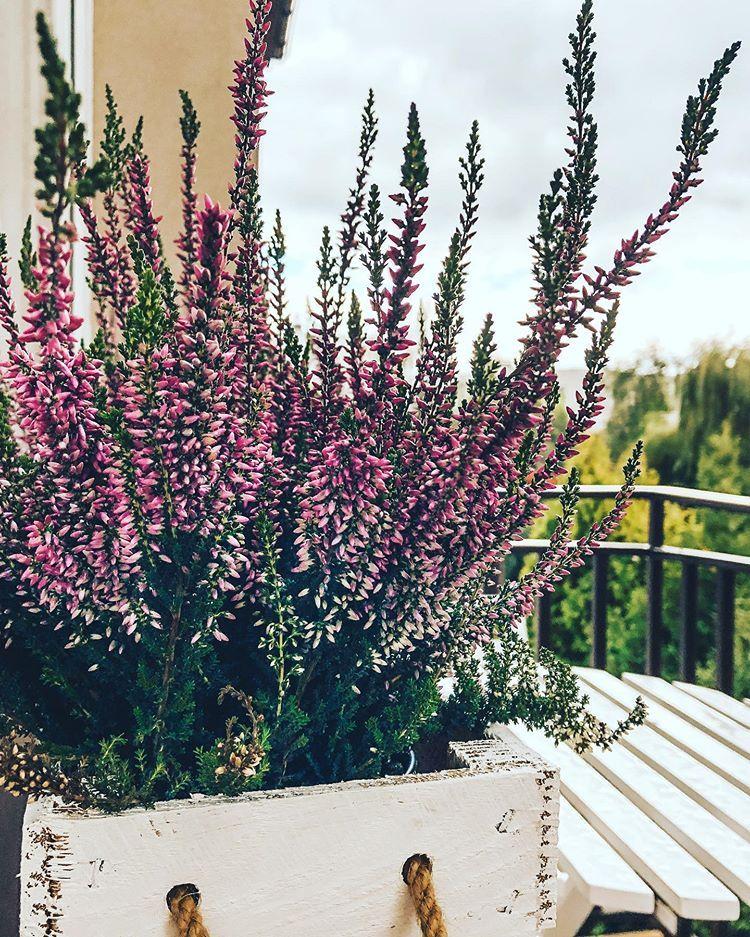 Angielskie Ogrody I Kwiatowe Inspiracje Wrzesien Natural Garden Garden Design Plants