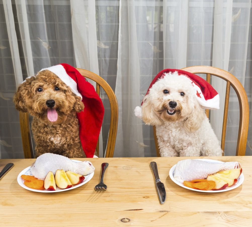 Du vet ju det här innerst inne: Man ska bara fira jul ihop med hundar. Alltid.