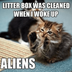 The litter box was cleaned