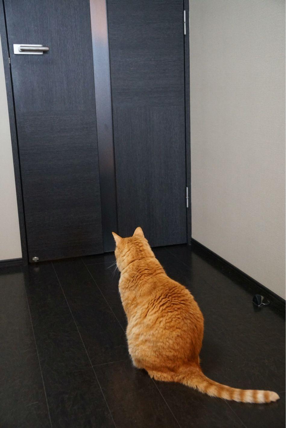 ただいにゃー ちゃんとドアの開閉を計算して待つイマル君 にゃー して ドア