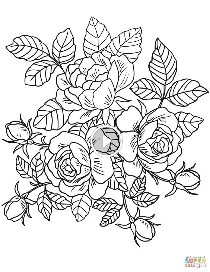 Introduction To Colorit Download Pack Of 20 Drawings Kostenlose Erwachsenen Malvorlagen Malvorlagen Blumen Blumen Ausmalbilder