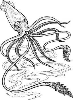 Deep Ocean Giant Squid Coloring Page Super Coloring Giant Squid Squid Drawing Giant Squid Drawing