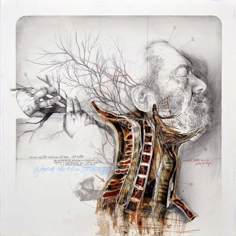Nunzio Paci Corpo Pinterest Illustrations Anatomy And Human