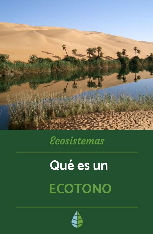 Qué Es Un Ecotono Definición Y Ejemplos Tipos De Ecosistemas Ecosistemas Ecosistema Terrestre Y Acuatico