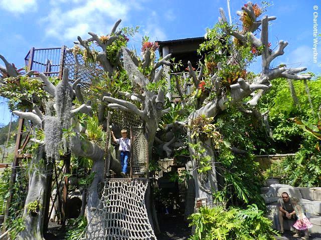 Brooklyn botanical garden free tuesdays garden ftempo - Brooklyn botanical garden free admission ...