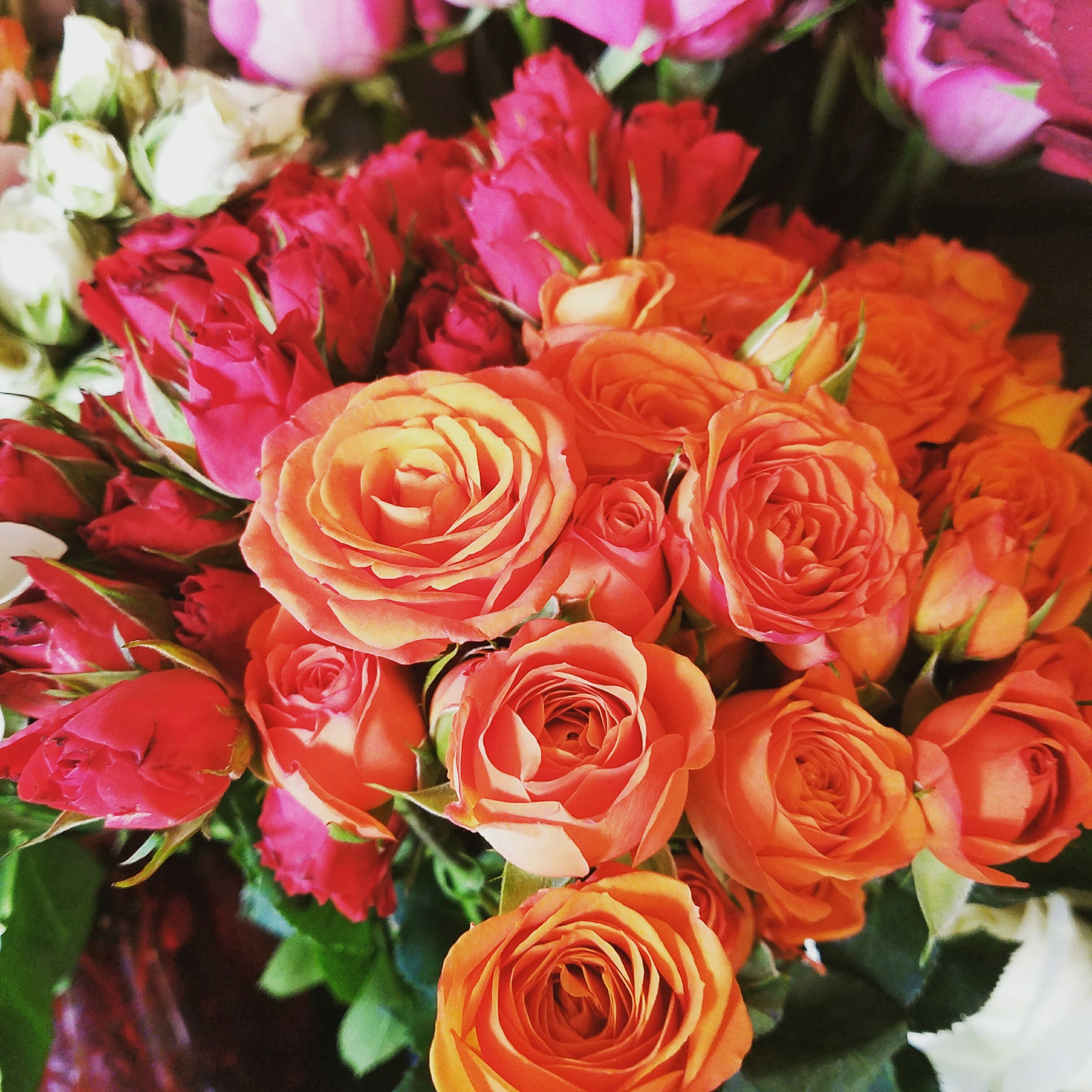 Where to buy bulk flowers online for your wedding babysbreath where to buy bulk flowers online for your wedding these are the biggest blooms of roses and most magnificent succulents at cheap wholesale izmirmasajfo