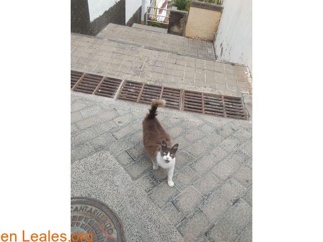 Animales Solo Para Acogida Temporal Espana Las Palmas Gran