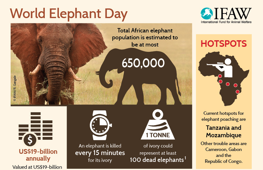 Image result for elephant poaching posters World