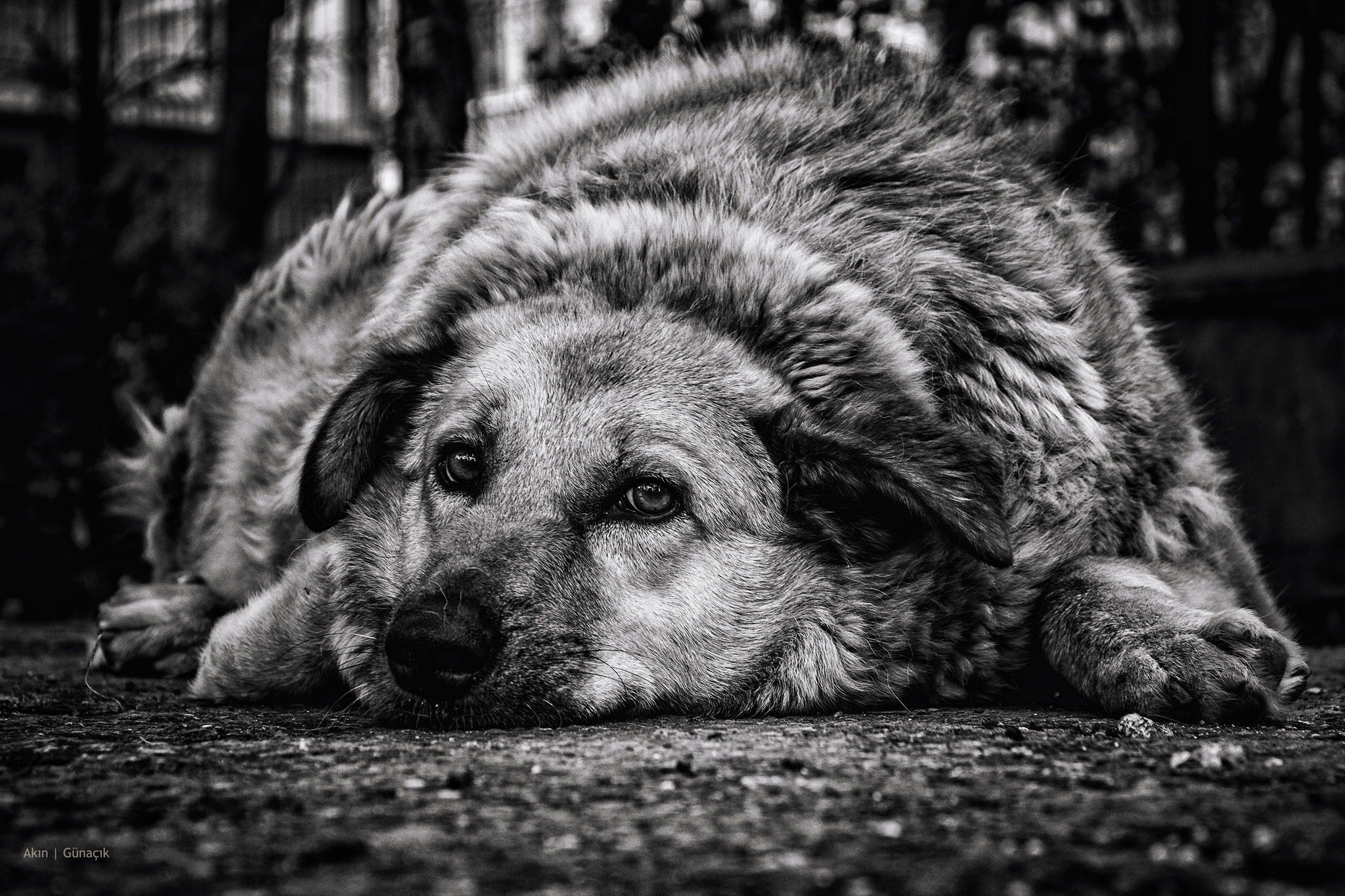 Stray Dog Black And White Dog Photography DogsinBlackAndWhite - This photographer is celebrating stray cats through majestic portrait photographs