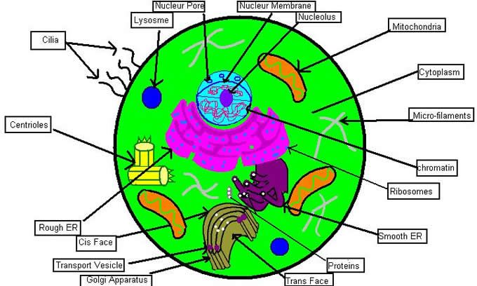5 Creative Ways To Teach The Cell Unit Cells Teaching