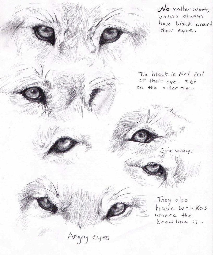 Tumblr youtube twitter facebook flickr this is the wolf paws by adothwolf on deviantart ccuart Image collections
