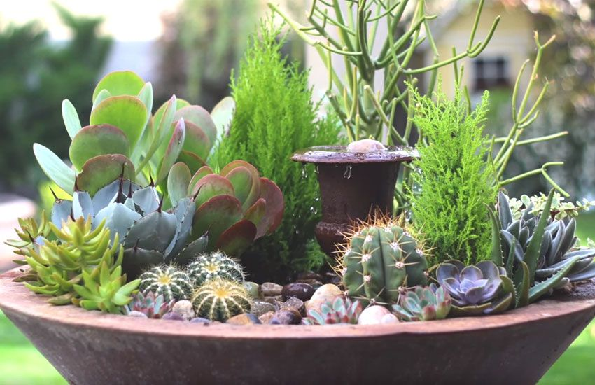 How To Create A Stunning Succulent Fountain Arrangement Potted
