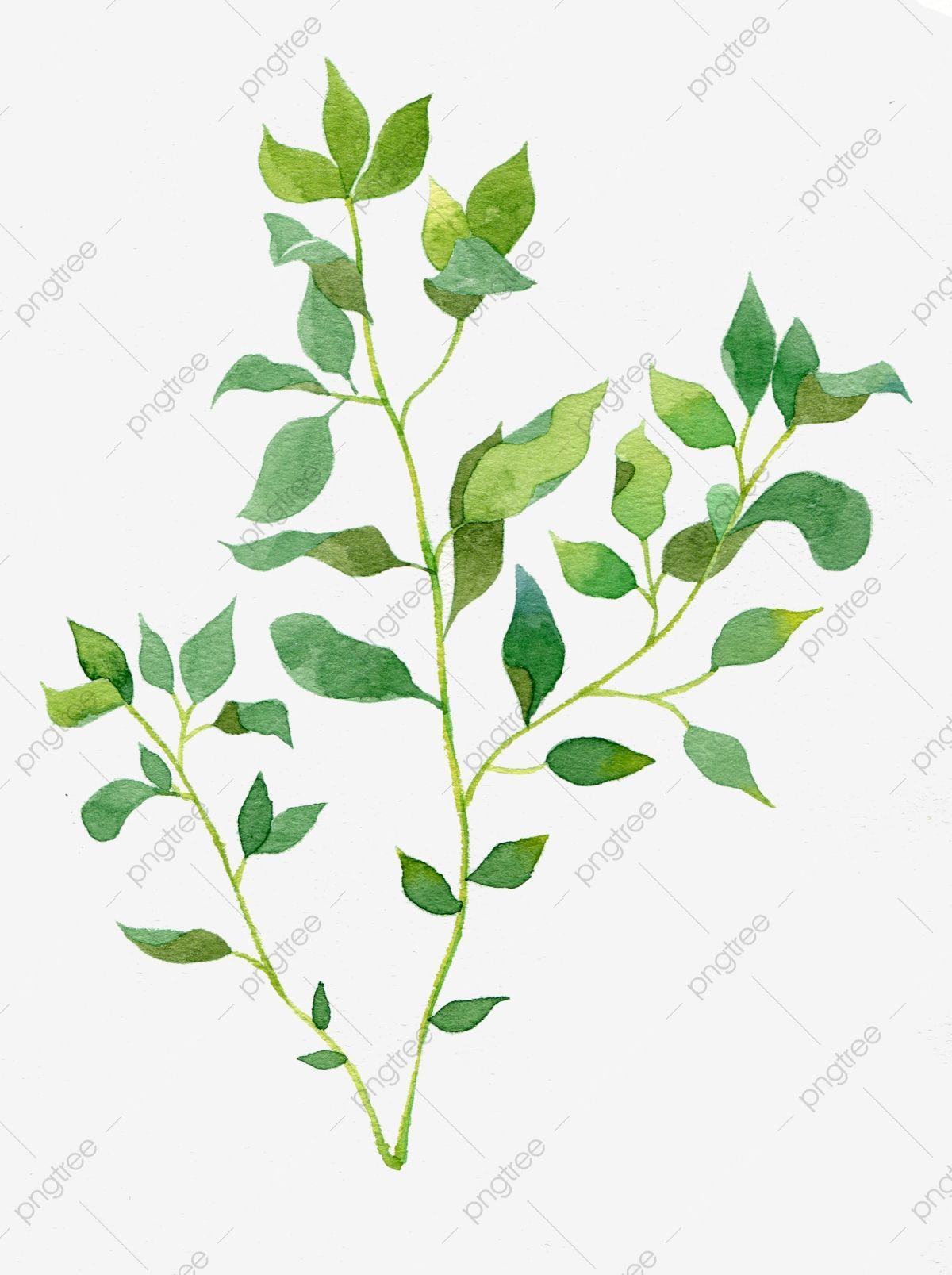الورقة الخضراء الأزرق يترك الماءيه يترك الماءيه مصنع ورقة الشجر المرسومة فرع شجرة نباتات مرسومة باليد Png وملف Psd للتحميل مجانا Watercolor Plants Watercolor Leaves Watercolor Trees