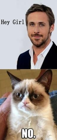 Implacable! Even Ryan Gosling could nothing against Grumpy Cat.