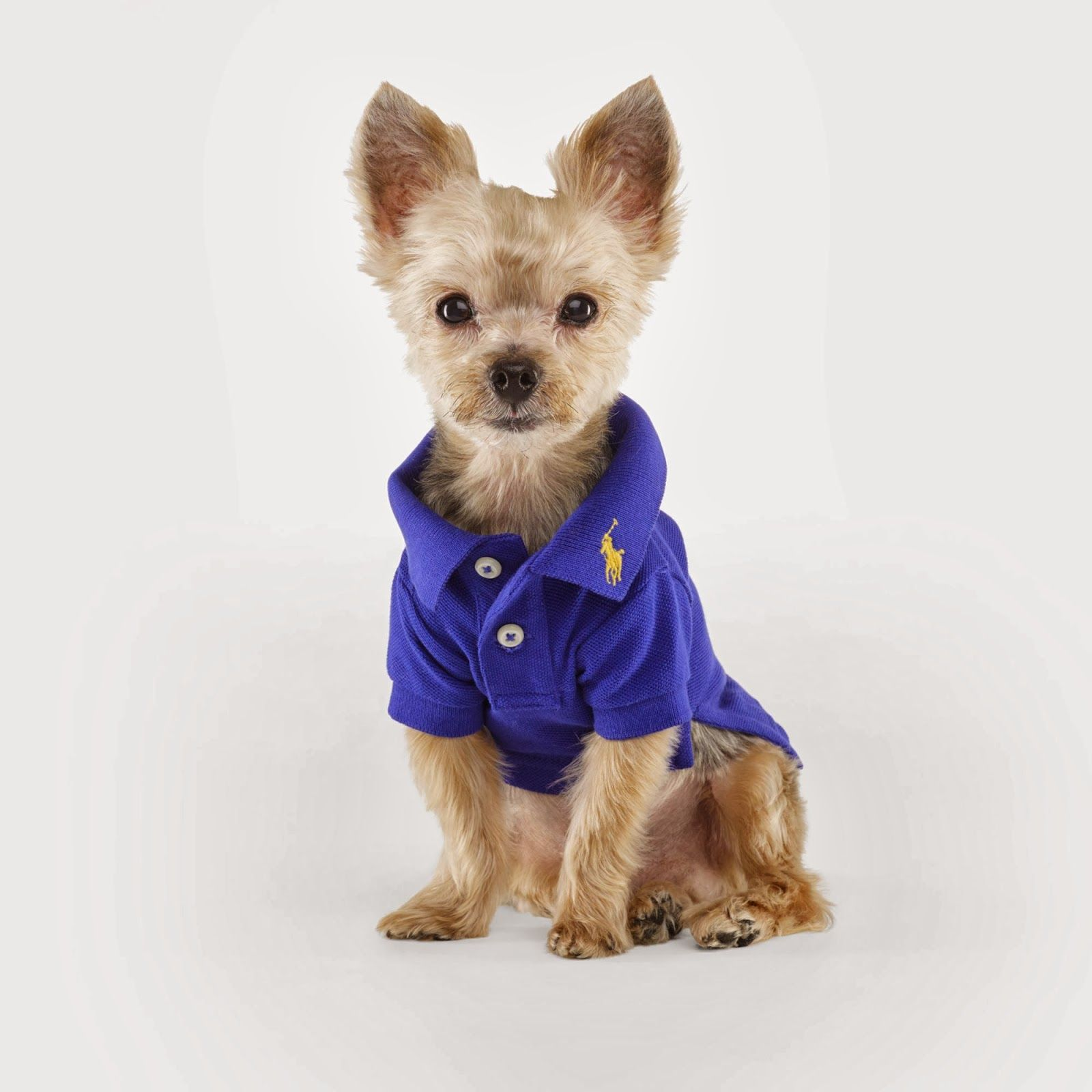 ralph lauren 39 the dog walk 39 accessories and dog clothing fall winter 2013 dog coats dog