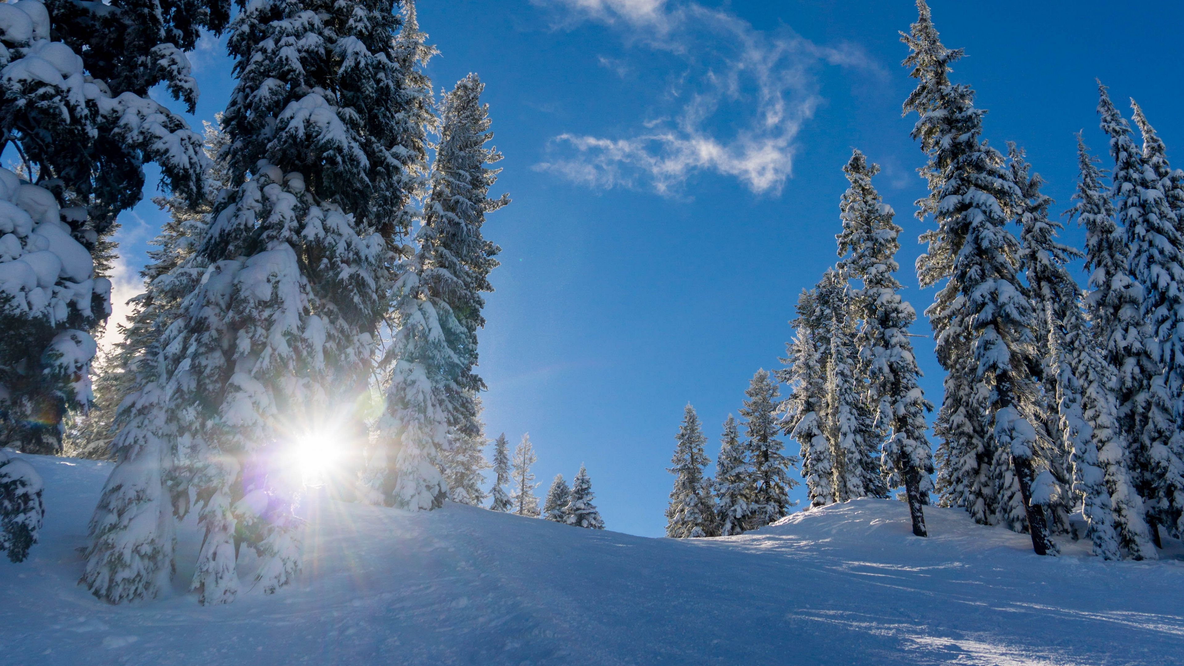 Forest Winter Snow Trees Sunlight Elevation 4k Winter Snow Forest Snow Forest Forest Wallpaper Winter Forest