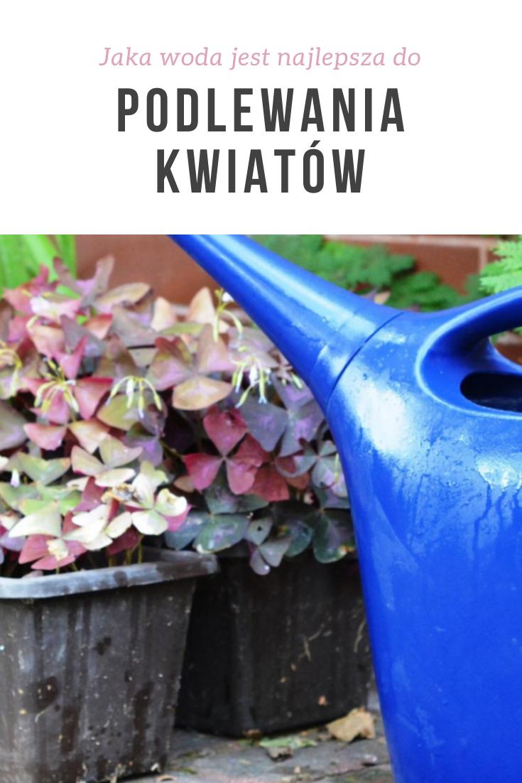 Jaka Woda Jest Najlepsza Do Podlewania Roslin Doniczkowych Canning Watering Can Watering
