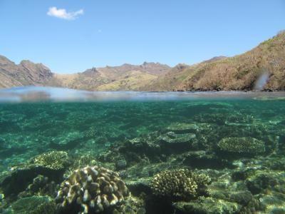 Fiji's coral reefs