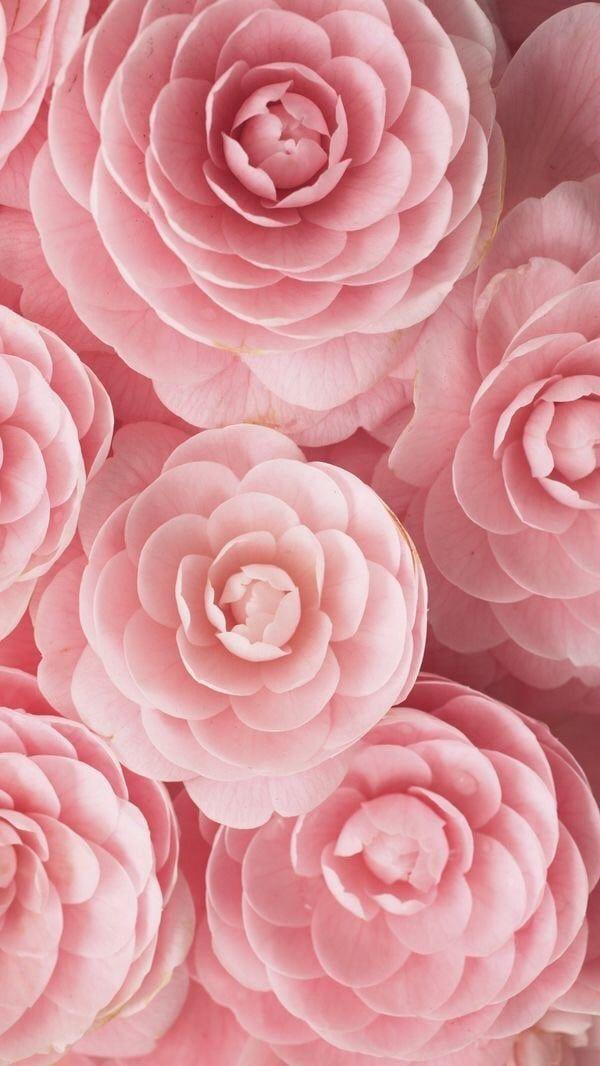 Gambar Ditemukan Oleh Lucian Temukan Dan Simpan Gambar Dan Videomu Di We Heart It Flower Aesthetic Flower Wallpaper Pastel Pink Aesthetic