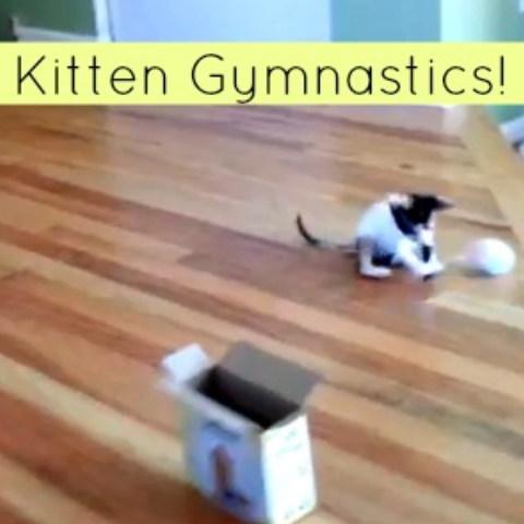 If Youre Having A Bad Day This Will Cheer You Up Kitten Gymnastics