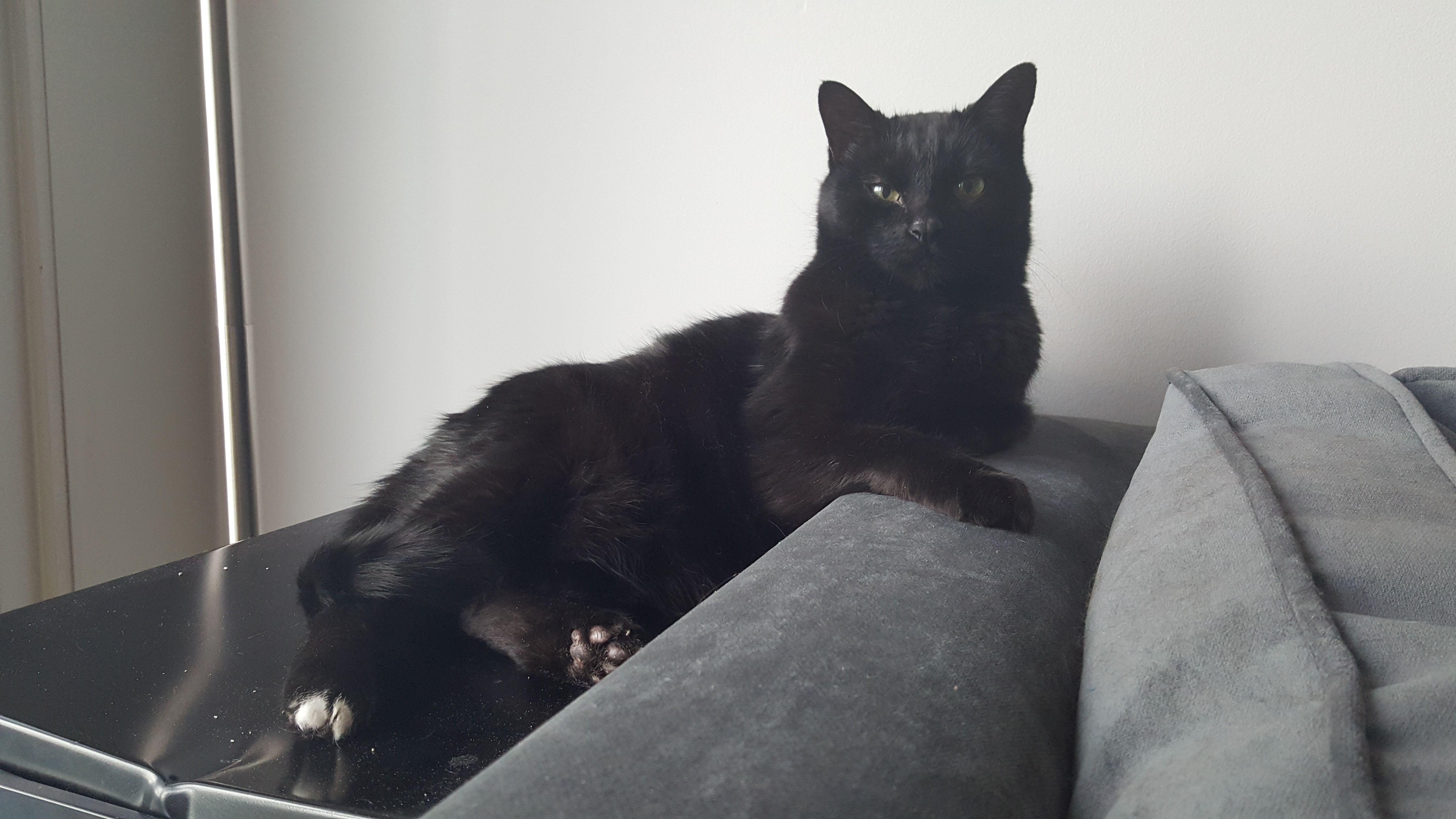Nin Nin Cat | Pawshake