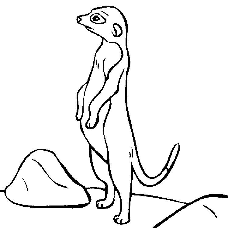 Coloring Page Mother Meerkat With Her Little Cute Baby
