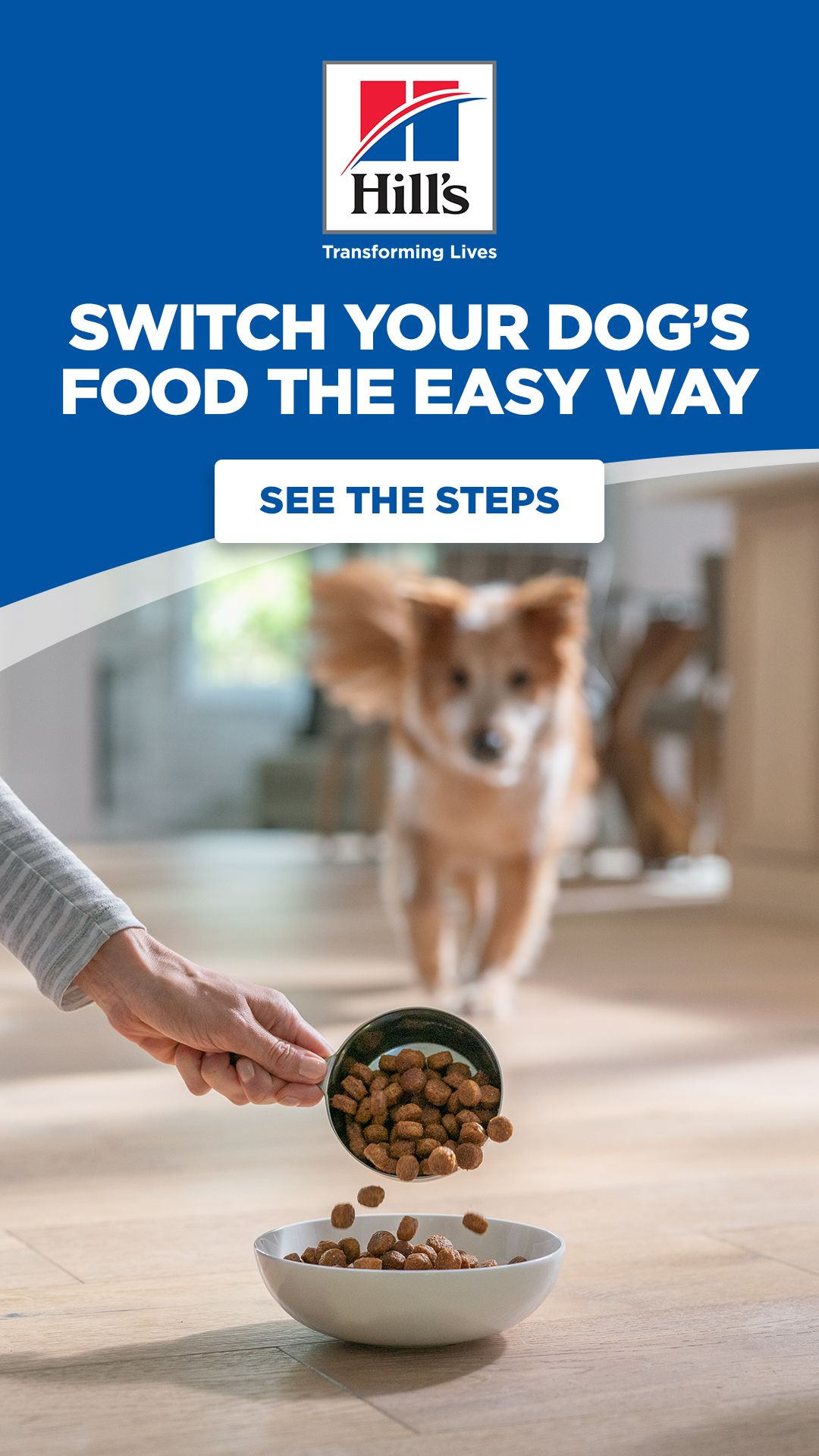 How Do I Switch Or Transition Foods For My Dog Premium Dog Food