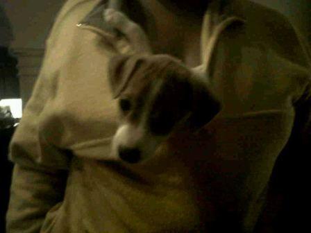 Mariah Careys puppy Twitpics