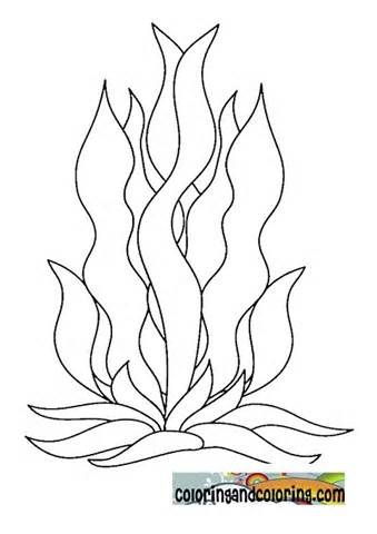 seaweed coloring pages Seaweed Colouring Pictures | June Preschool  The Ocean | Coloring  seaweed coloring pages