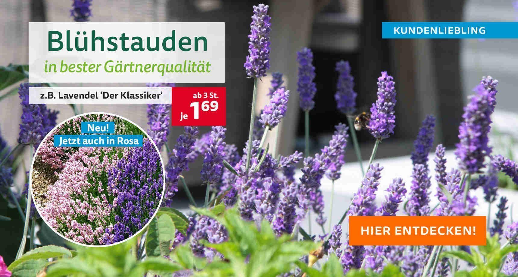 +++ (2) Blühstauden +++ - 3 #kletterpflanzenwinterhart +++ (2) Blühstauden +++ - 3 #kletterpflanzenwinterhart +++ (2) Blühstauden +++ - 3 #kletterpflanzenwinterhart +++ (2) Blühstauden +++ - 3 #kletterpflanzenwinterhart +++ (2) Blühstauden +++ - 3 #kletterpflanzenwinterhart +++ (2) Blühstauden +++ - 3 #kletterpflanzenwinterhart +++ (2) Blühstauden +++ - 3 #kletterpflanzenwinterhart +++ (2) Blühstauden +++ - 3 #kletterpflanzenwinterhart