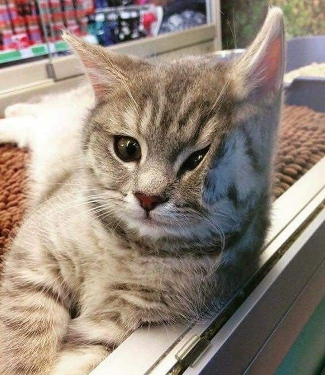 Pin by Tedi Malik on Animals Cute cats