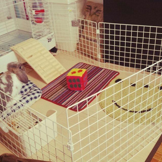 リビング うさぎ ワイヤーネット Diy 賃貸 などのインテリア実例 2015 09 03 16 22 18 Roomclip ルームクリップ ウサギ用ハウス ウサギ 部屋 ペットの部屋