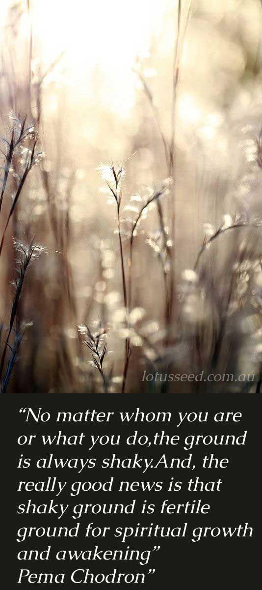 Pema Chodron Quotes By Lotusseedau Inspirational Quotes Amazing Pema Chodron Quotes